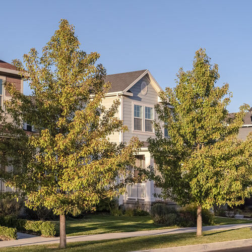 Trees in Front of Homes