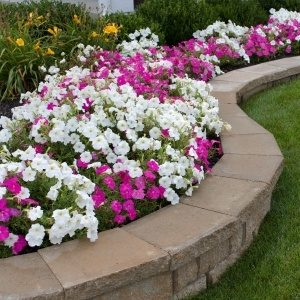 A Picture of a A Retaining Wall with Flowers Planted On it.