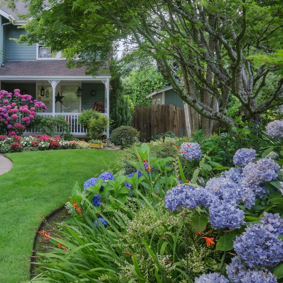edging along a garden and hydrangeas