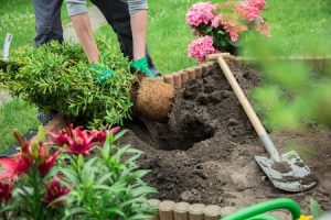 Gardening Trends For You In Mdm Landscapes
