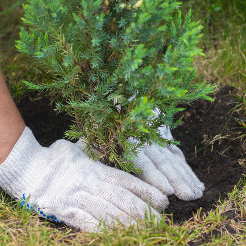A Person Plants a Tree.