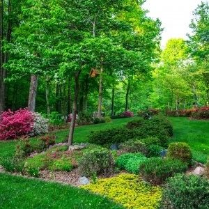 A Picture of a Beautiful Garden.