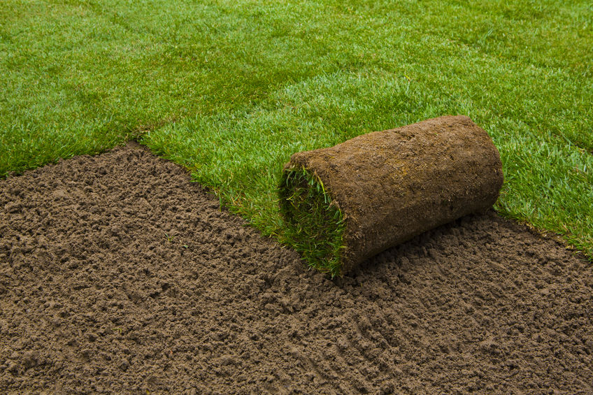 A Picture of Applying Turf Rolls.
