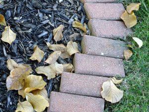 bricks lining a walk way