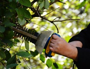 Pruning & Trimming Services in Granbury & Aledo