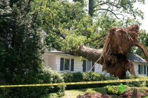 A Large Tree Collapsed on Top of a Home Roof