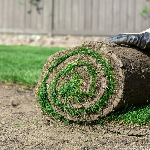 A Picture of Someone Installing New Grass.