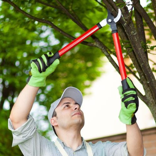 A Picture of a Man Performing Tree Pruning.