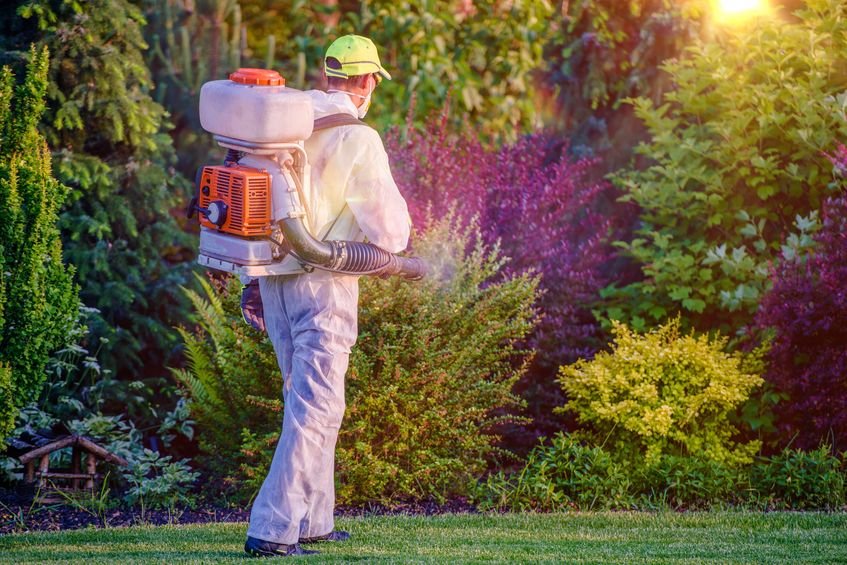 A Picture of a Man Spraying a Garden.