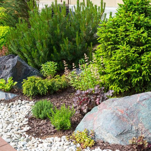 A Picture of Natural Landscaping in a Garden.