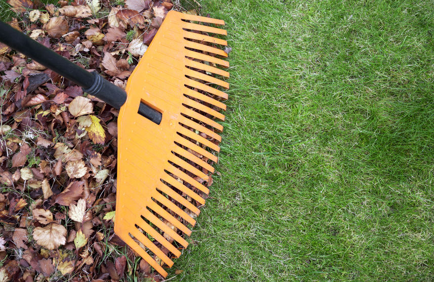 Raking Leaves is a Great Way to Maintain Lawn Care