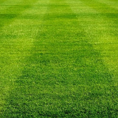 An Up Close Picture of Sport Turf.